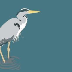 Digital Birds: Grey Heron