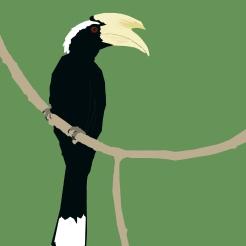 Digital Birds: Black Hornbill