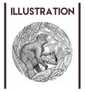 illustration-section