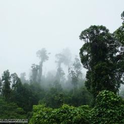 Pillars in the Mist, Sabah, Malaysia