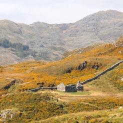 Yellow Mountainside, Snowdonia Wales