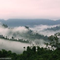 Bornean Rainforest at Dawn