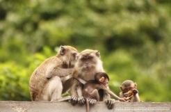 Macaque Family, Batu Caves, KL