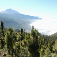 Tenerife in the sea of clouds