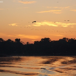 The Amazon at dawn, Pacaya-Samiria, Peru