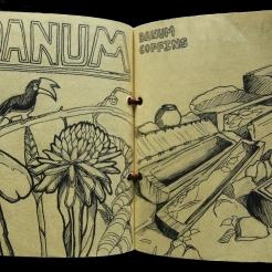 Sketchbook Page: Danum Valley Drawings