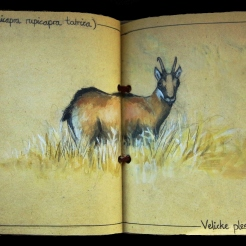 Sketchbook Page: Encounter with a Tatra Chamois
